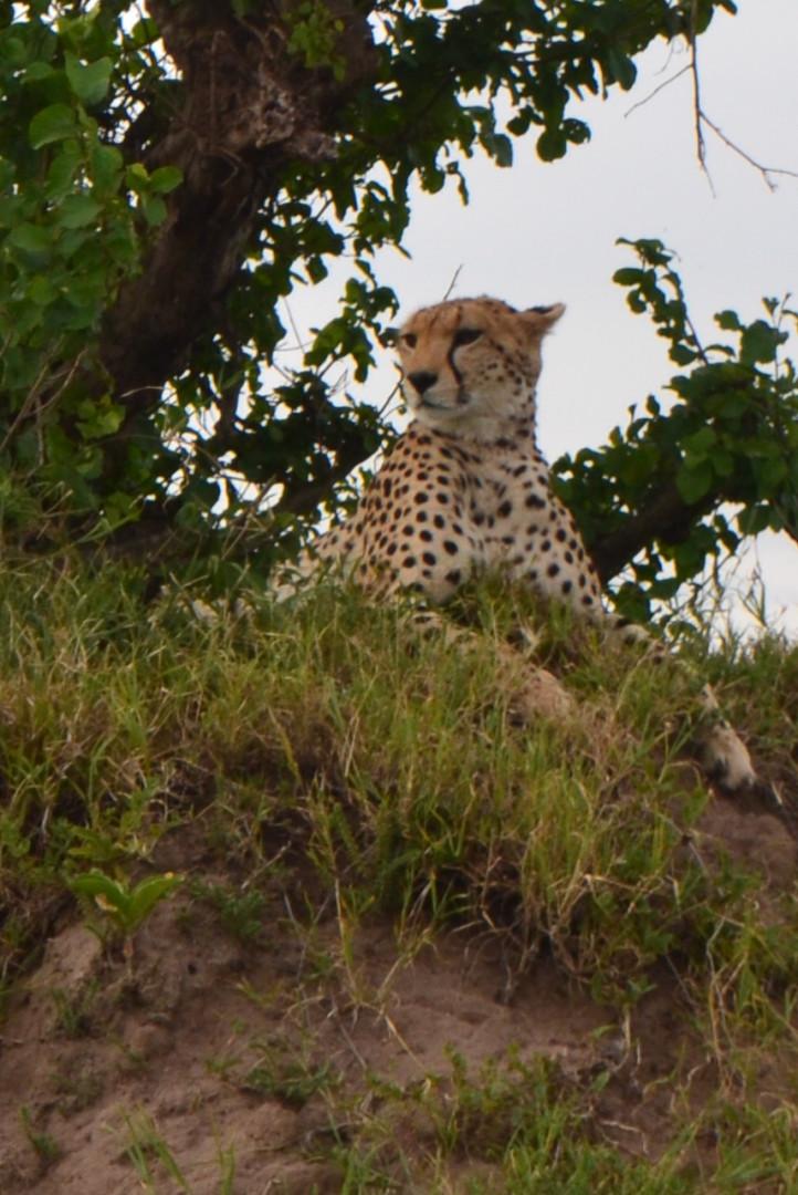 Kenyan Safari pt 1