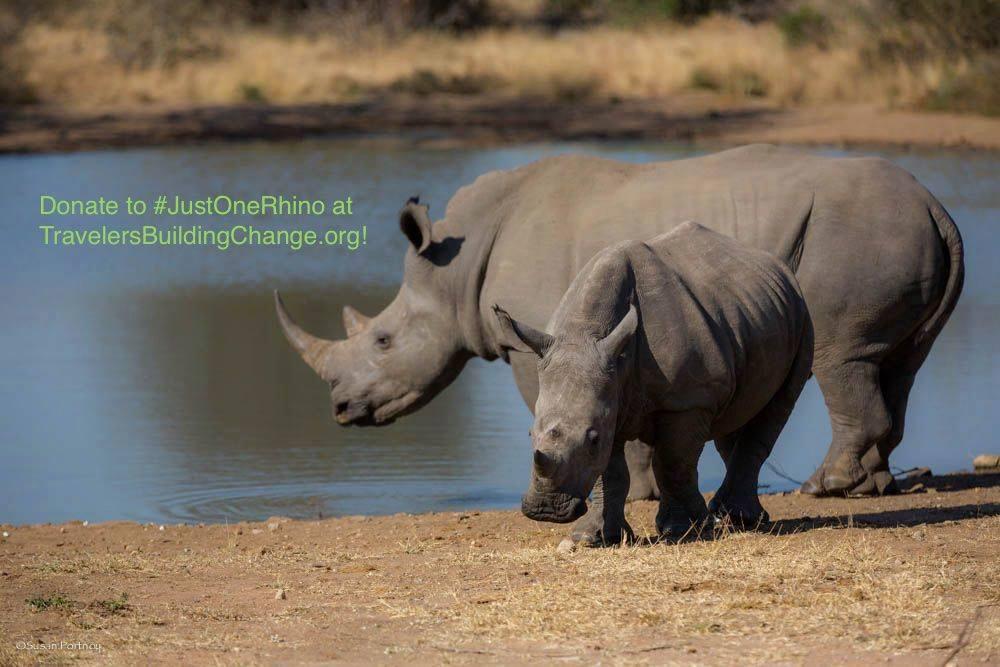 Help to Save #JustOneRhino Before They Become Extinct