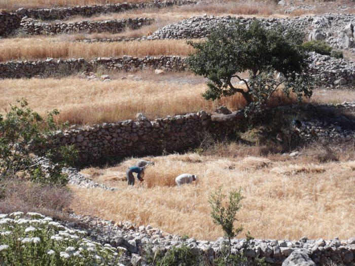 Yedi Village